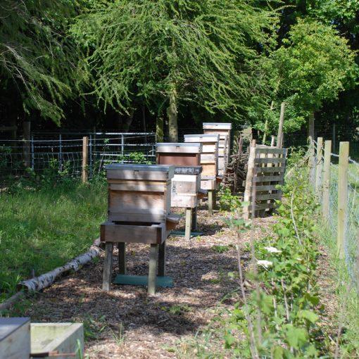 Dalmore apiary