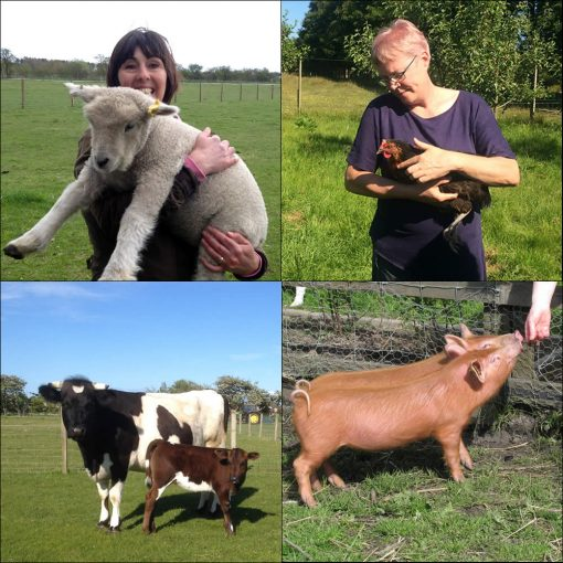Introduction to Smallholding course